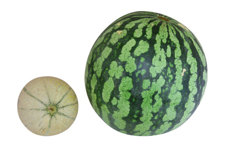 Cantaloupe and watermelon Stock Photo