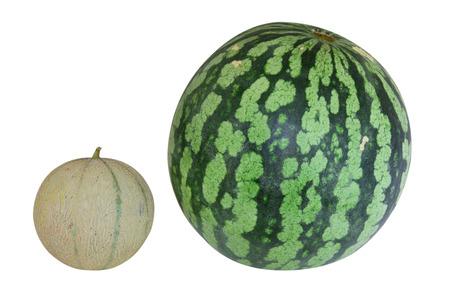 Cantaloupe and watermelon Stock Photo
