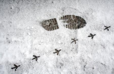 Foot prints in snow