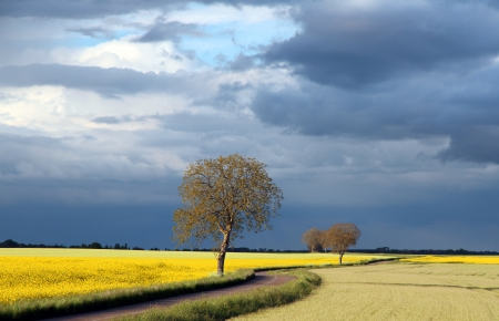 A field and trees against cloudy blue sky Stock Photo