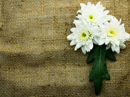 flower on sack fram and copy space