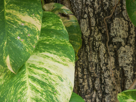 foe: green leaf in foe ground and bark in background Stock Photo