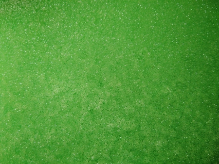 close up texture of green sponge for background texture Stock Photo