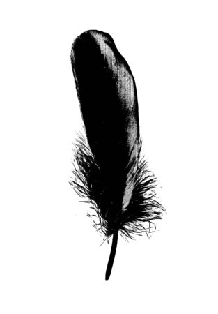 Black Feather Ink Graphic Drawing Illustration 写真素材
