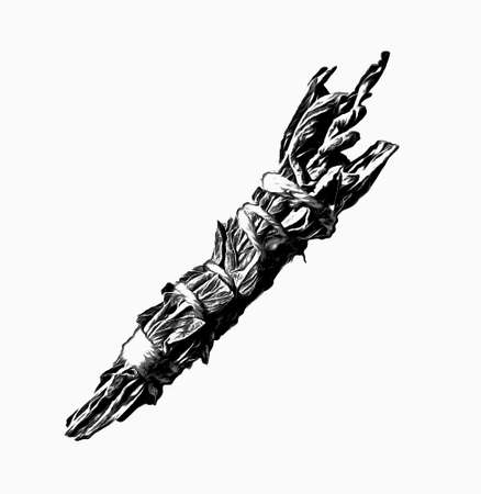 White Sage Smudge Stick in Black Ink 写真素材