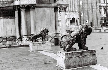 gaurd: Venice Lions on Gaurd