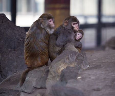 Monkeys in zoo  photo
