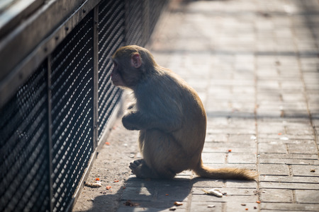 Monkey Stock Photo - 25637585