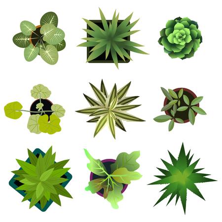 Bovenaanzicht. planten Gemakkelijk copy-paste in uw landschapsontwerp projecten of architectuur plan. Geïsoleerde bloemen op een witte achtergrond. Vector Stock Illustratie