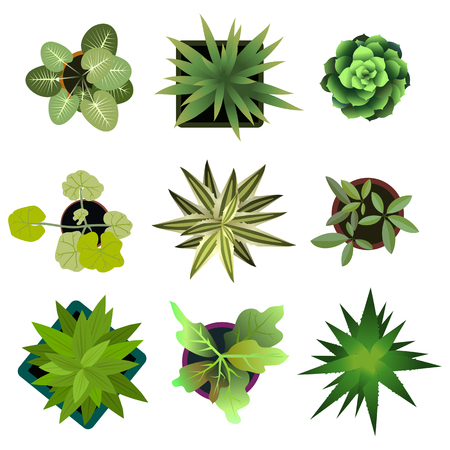 Top view. plants Easy copy paste in your landscape design projects or architecture plan. Isolated flowers on white background. Vector