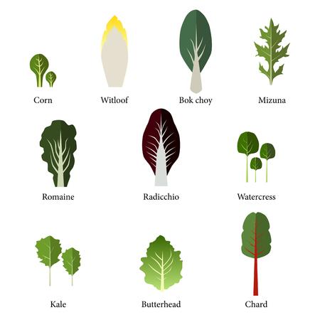 Set di insalatiera. verdure a foglia insalata verde. Vector EPS 10