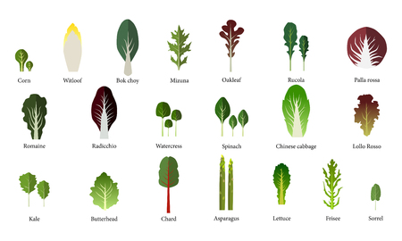 leafy: Set of salad bowl. Leafy vegetables green salad. Vector EPS 10