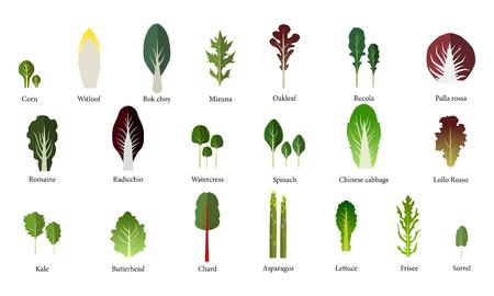 Zestaw salaterki. Warzywa liściaste zielone sałatki. Wektor EPS 10