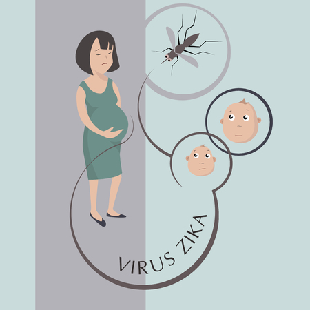 no mosquito: Zika virus outbreak concept. Transmitted by Aedes aegypti mosquito and it is linked to cause microcephaly on infected pregnant women. Vector eps 10