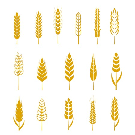 grain fields: Set of simple wheat ears icons and design elements for beer, organic local farm fresh food, bakery themed design, wheat grain. Wheat vector eps 10