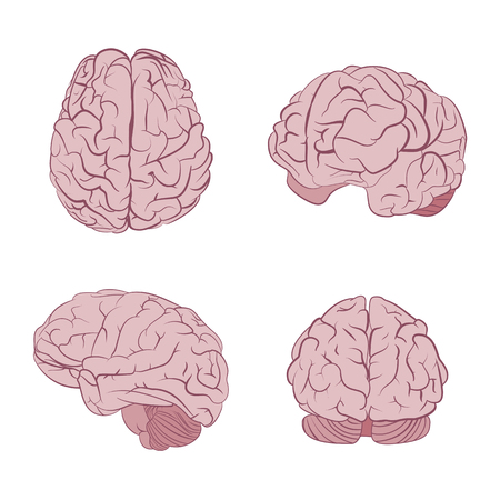 frontal view: Human brain four views. Top, frontal, side, three-quarter. Flat brains vector icons eps10