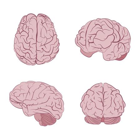 Das menschliche Gehirn vier Ansichten. Top, Front-, Seiten-, Dreiviertel. Flache Gehirne Vektor-Icons eps10