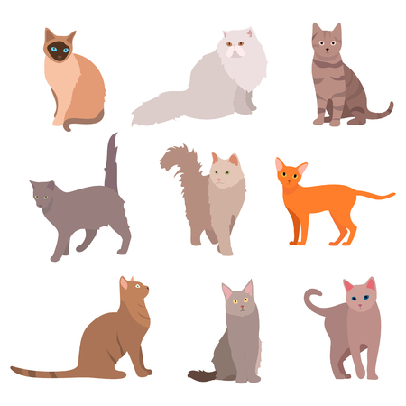 calico: Cat big set. Beautiful cartoon cats isolated on white. Vector eps10 Illustration
