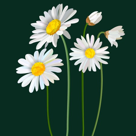 Chamomile flower mint leaves composition isolated on green background as package design element. Vector eps10 Vectores