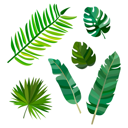 Set of palm leaves on white background. Vector illustration eps10