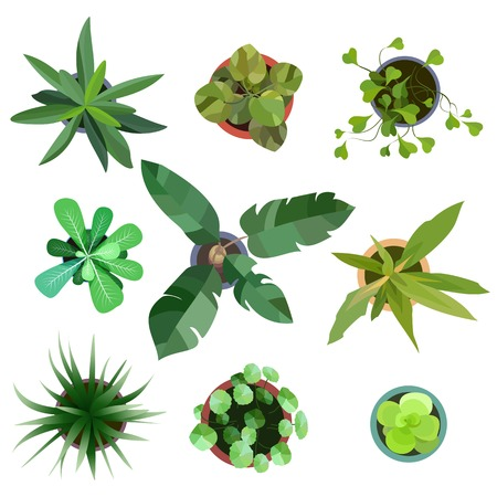 Top view. Big collection plants easy copy paste in your landscape design projects or architecture plan. Isolated flowers on white background. Vector