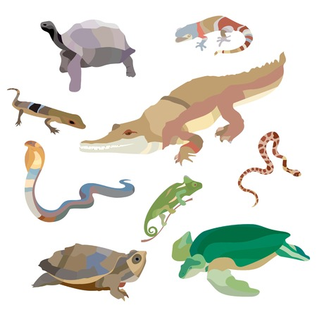 amphibians: Reptiles and amphibians decorative set of lizard, crocodile, turtle, cobra, snail icons in cartoon style isolated. Vector illustration