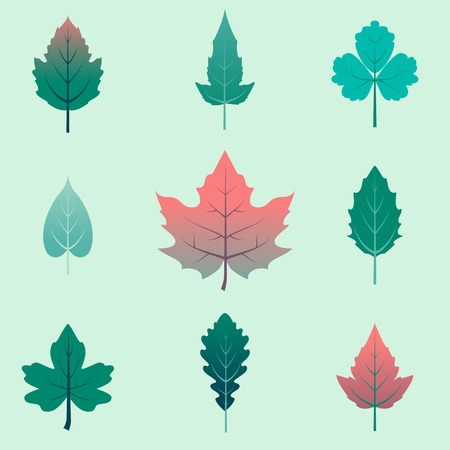 Autumn leaves flat set, isolated on green background. Designed in cartoon style. Vector illustration Illustration