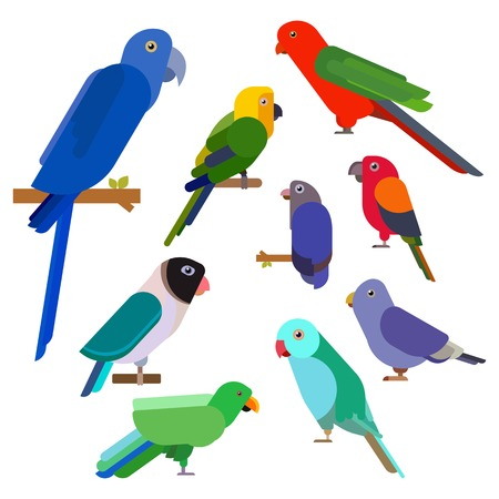 Cartoon parrots collection. Parrot wild animal birds set. Tropical feather zoo birds and tropical fauna macaw flying ara. Various cartoon exotic birds in flat style. Vector illustration