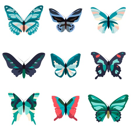 Big collection of colorful butterflies. Butterflies isolated on white. Vector illustration