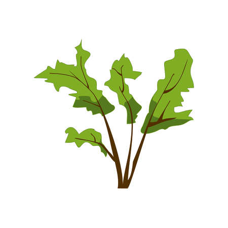 one trim: Green herbal plant isolated on white. Bush with brown branches, app game UI or web element icon. Vector illustration eps10