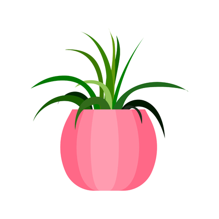 Green house plant in pot. Illustration