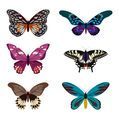 Big collection of colorful butterflies. Butterflies isolated on white. Graphic illustration