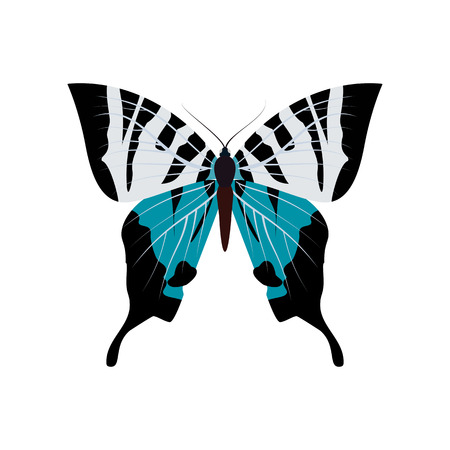 Big of colorful butterfly. Illustration
