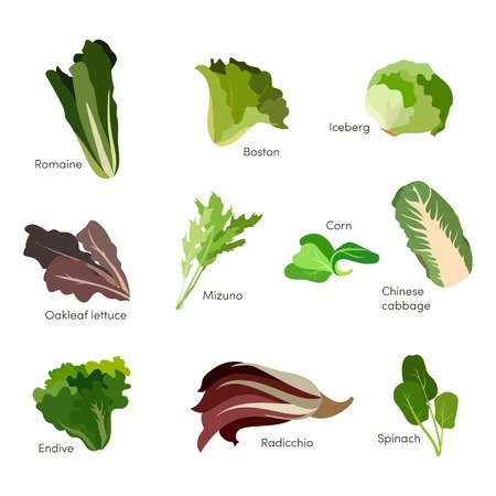 Set of salad greens. Leafy vegetables salad icons. Graphic illustration