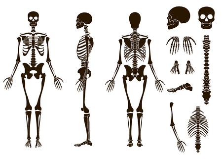 Human bones skeleton structure elements set. Skull collection. Vector illustration eps10