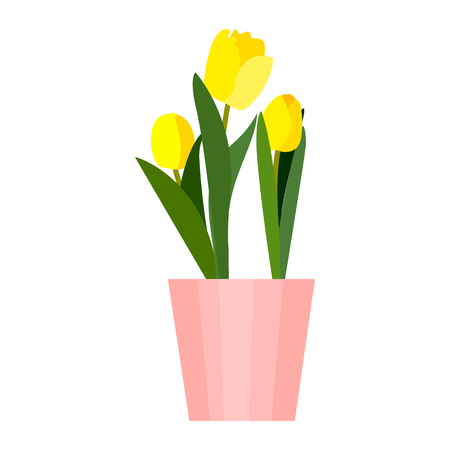 Yellow house tulips plant in pot. Green leaf tulip flower flat. Vector Illustration