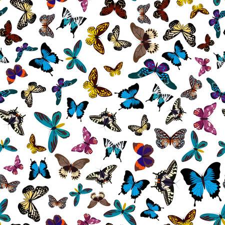 Colorful print pattern seamless butterflies. Butterflies print pattern seamless isolated on white. Vector print pattern seamless illustration