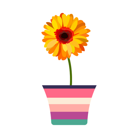 Gorgeous orange flower with a green stem colored in a flowerpot. Vector illustration isolated on white
