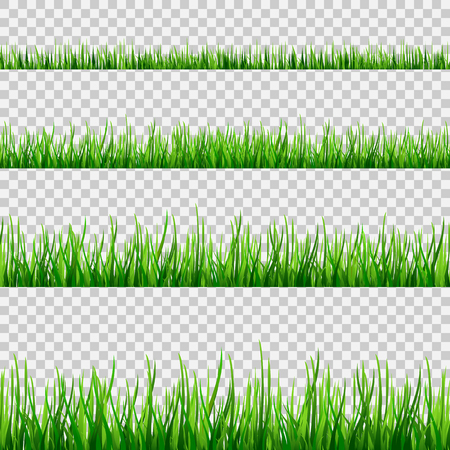 Grass seamless field pattern isolated on white. Vector green grass illustration eps10