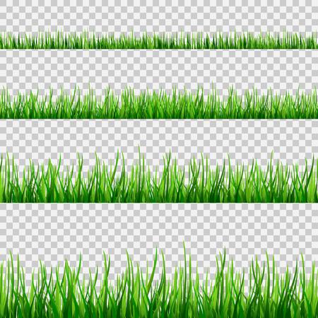 Patrón de campo transparente de hierba aislado en blanco. Vector ilustración de hierba verde eps10