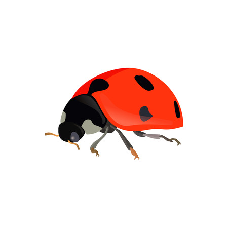 Red ladybugs. Vector ladybird isolated on white background eps10