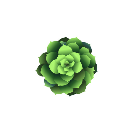 Top view green houseplant icon. Plant in pot isolated on white. Vector illustration