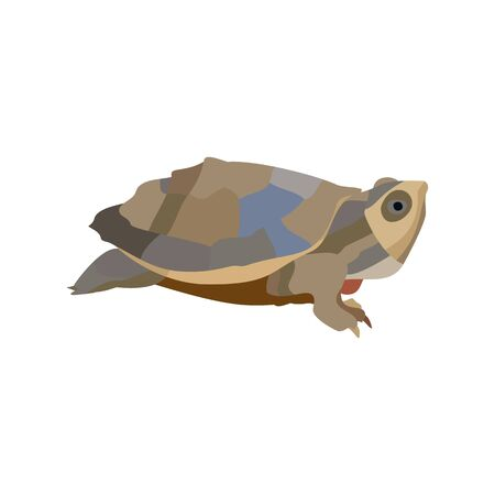 Cartoon turtle isolated on white background. Vector