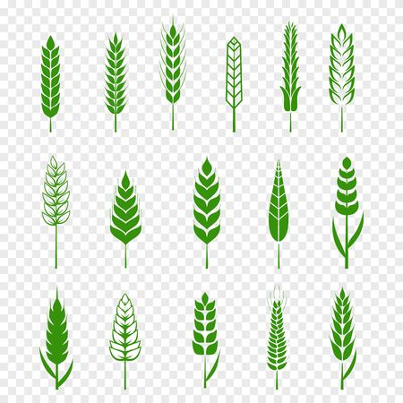 Set of simple green wheats ears icons and wheat design elements for beer, organic or local farm fresh food, bakery themed wheat design, grain, beer elements, rye simple. Vector illustration