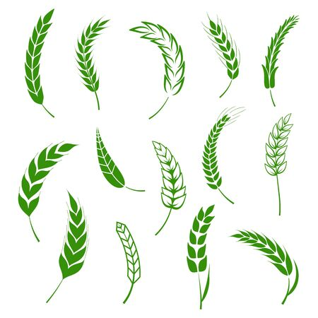 Set of simple wheats ears green icons and grain design elements for beer, organic wheats local farm fresh food, bakery themed wheat design, grain, beer elements.