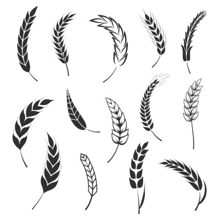 Set of simple wheats ears icons and wheat design elements for beer, organic fresh food corn farm, bakery themed agriculture design, grain element, wheat simple pattern. Vector illustration