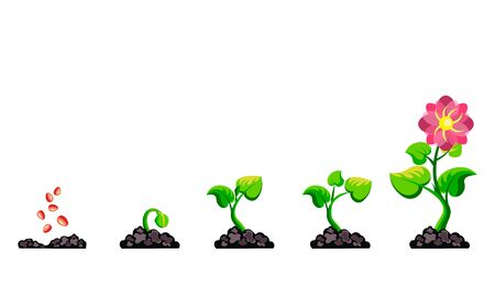 Phases plant growth infographic. Process cultivation sprout in the ground. Vector illustration garden plant