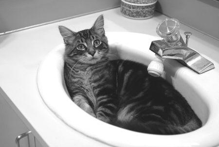 cat in sink antics Stockfoto
