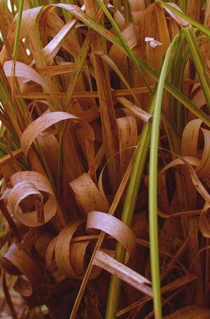 woodsy: grasses like wood shavings