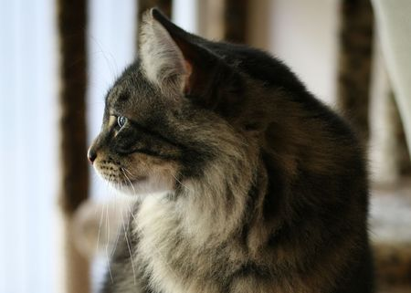 observant: observant cat (and elegant with it, natch)
